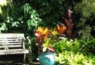 Aberdare Tropical landscaping 11